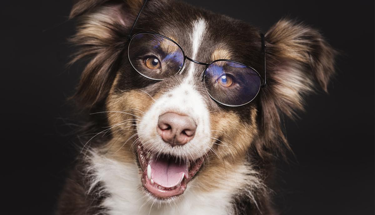 Cuidados com a visão do seu pet